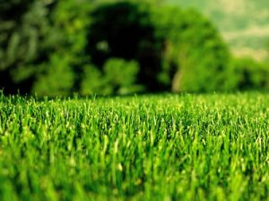 Lawn Feeding, Fertiliser & Treatments