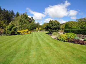 Garden Renovation & Maintenance