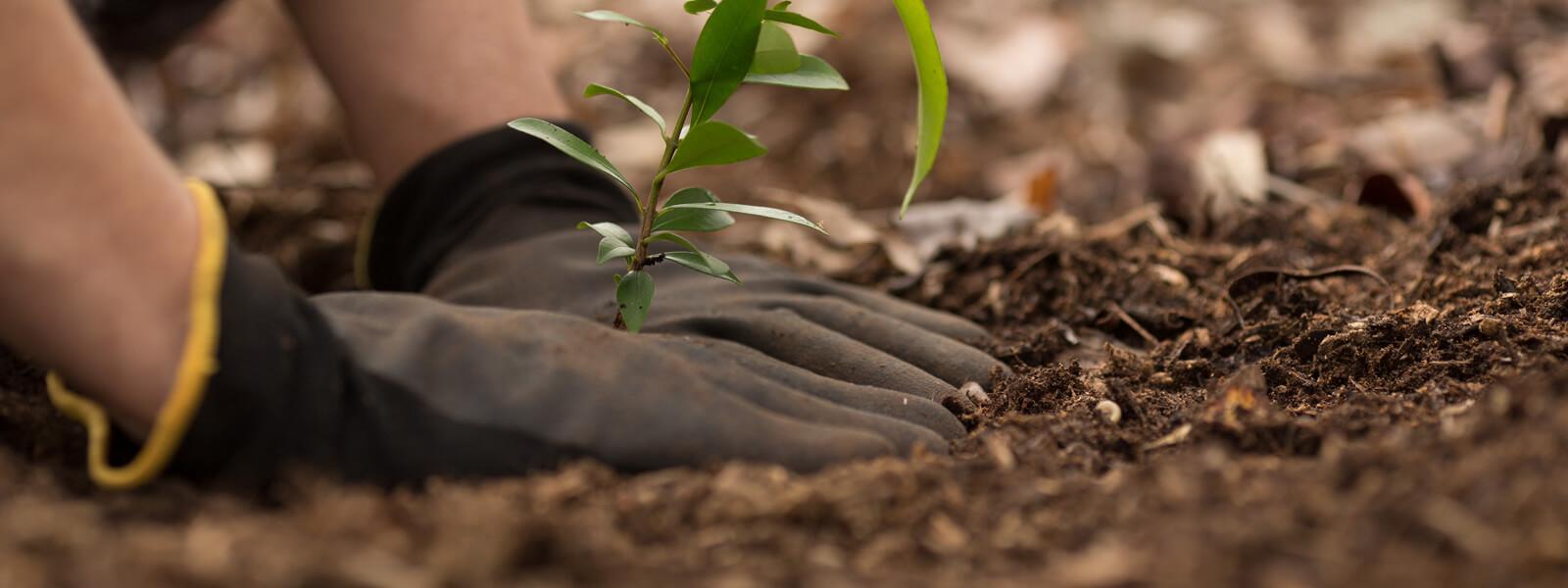 Planting & Borders