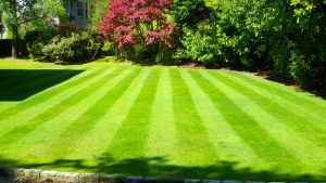 lawn with fertiliser