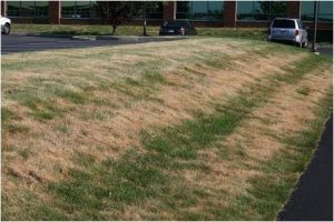 Lawn Drought Management