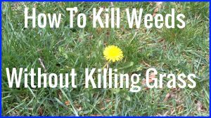 How to kill weeds but not the grass