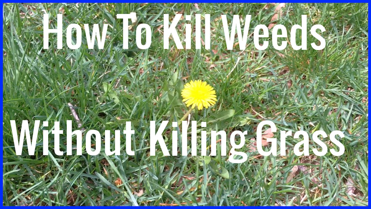 How to kill weeds but not the lawn