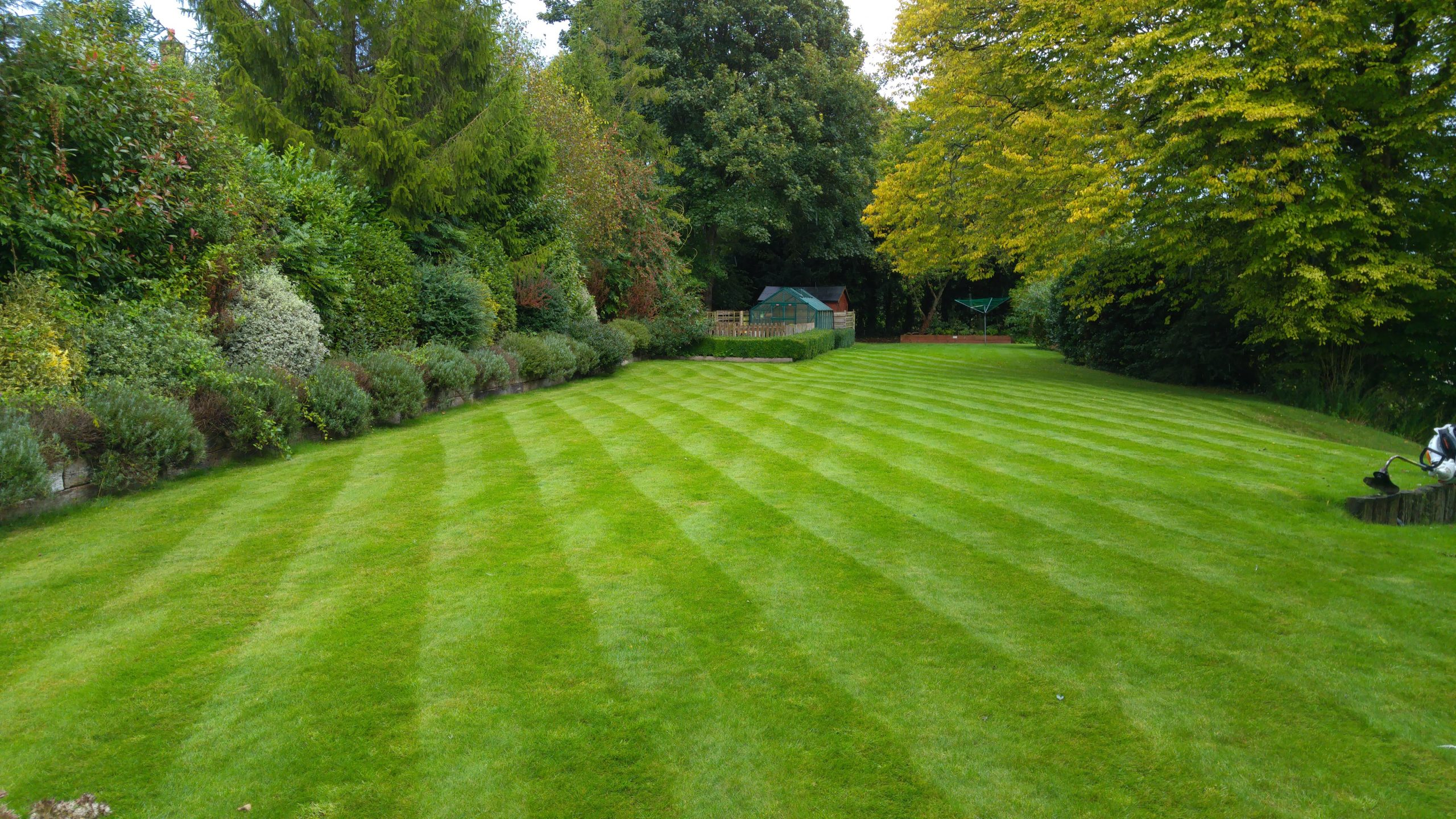 Lawn Aeration made easy with our step by step guide