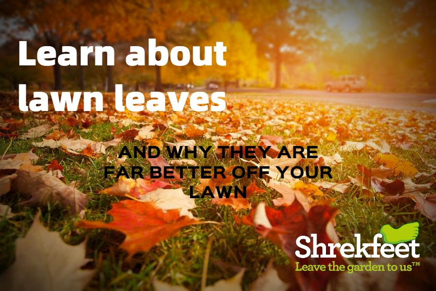 Complete Guide to Lawn Leaf Care