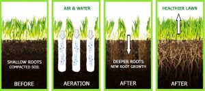 How a lawn aerator works