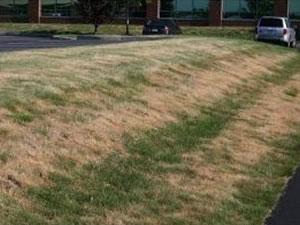 Lawn Drought Management