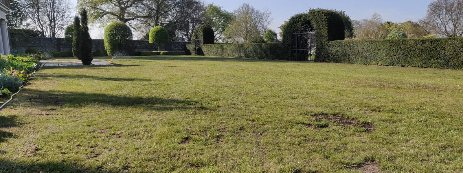 Lawn Thatch Removal
